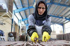 تعطیلی کارخانهها و بیکاری کارگران از عواقب کرونا در ایلام/ قانون کار درباره زنان سرپرست خانواده اجرا نمیشود