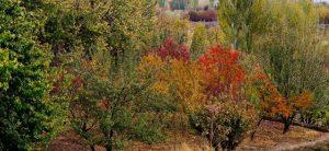 میشخاص ایلام قلمرو هزار رنگ پادشاه فصل ها پاییز