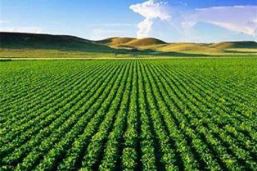 ۱۱ هزار میلیارد ریال برای توسعه کشاورزی ایلام سرمایه گذاری شد