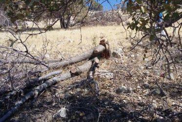 متخلفان قطع درخت در اراضی ملی منطقه «بانکول» ایلام دستگیر شدند