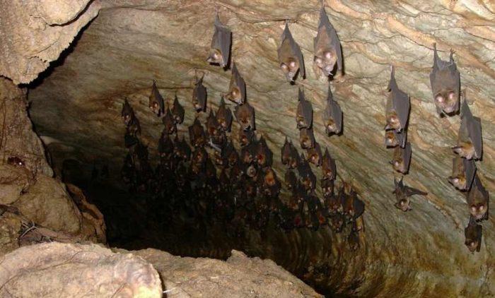 یکی از مخوف ترین غارهای خفاش جهان در ایلام/ تنها غار خفاش کشور